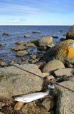 πέστροφα θάλασσας αλιείας ακτών Στοκ φωτογραφία με δικαίωμα ελεύθερης χρήσης