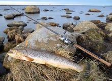 πέστροφα τροπαίων θάλασσας αλιείας Στοκ φωτογραφία με δικαίωμα ελεύθερης χρήσης