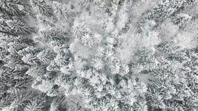 Πέταγμα επάνω από το άσπρο χιονώδες δάσος απόθεμα βίντεο