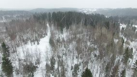 Πέταγμα επάνω από το χειμερινό δασικό τοπίο στο νεφελώδη καιρό με χιονοπτώσεις φιλμ μικρού μήκους