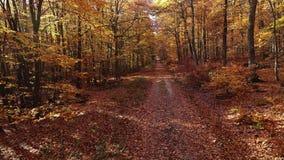 Πέταγμα μέσω ενός φθινοπωρινού δάσους - εναέρια άποψη απόθεμα βίντεο