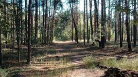 Πέταγμα μέσω του δάσους απόθεμα βίντεο