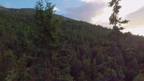 Πέταγμα μέσω των κορυφών δέντρων απόθεμα βίντεο