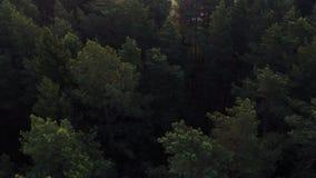 Πέταγμα πέρα από ένα απέραντο πολύβλαστο πράσινο πεύκο και κομψές κορυφές δέντρων στο δάσος φιλμ μικρού μήκους