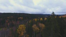 Πέταγμα πέρα από τα δέντρα φθινοπώρου στο δάσος στο μπλε ουρανό οριζόντων με τα σύννεφα απόθεμα βίντεο