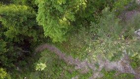 Πέταγμα πέρα από τα δέντρα απόθεμα βίντεο