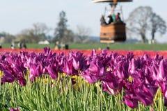 Πέταγμα πέρα από τα πορφυρά λουλούδια τουλιπών Στοκ εικόνα με δικαίωμα ελεύθερης χρήσης