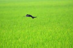 Πέταγμα πέρα από τα πράσινα στοκ φωτογραφίες με δικαίωμα ελεύθερης χρήσης