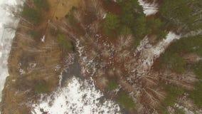 Πέταγμα πέρα από τα όμορφα δασικά δέντρα απόθεμα βίντεο