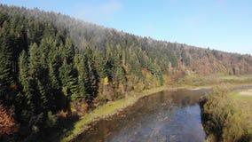 Πέταγμα πέρα από τον ποταμό Stryi βουνών Ο μεγάλος τσικνιάς Ardea alba πετά Όμορφη φύση φθινοπώρου Carpathians, Ουκρανία φιλμ μικρού μήκους