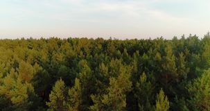 Πέταγμα πέρα από το δάσος απόθεμα βίντεο