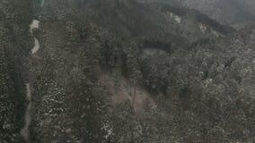 Πέταγμα πέρα από το δέντρο χιονιού το χειμώνα απόθεμα βίντεο