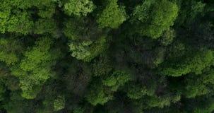 Πέταγμα πέρα από το δάσος βουνών απόθεμα βίντεο