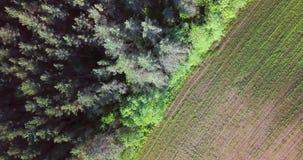 Πέταγμα πέρα από το πράσινο δασικό θερινό ηλιόλουστο τοπίο Εναέρια άποψη μήκους σε πόδηα κηφήνων άνωθεν Όμορφη επαρχία απόθεμα βίντεο
