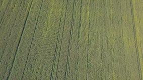 Πέταγμα πέρα από cornfield απόθεμα βίντεο