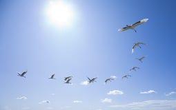 πέταγμα πουλιών Στοκ Εικόνες