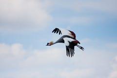 πέταγμα πουλιών Στοκ εικόνα με δικαίωμα ελεύθερης χρήσης