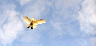 Πέταγμα πουλιών περιστεριών ζωικό αστείο θέμα κουταβιών χλόης Στοκ φωτογραφία με δικαίωμα ελεύθερης χρήσης
