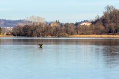 Πέταγμα πουλιών Στοκ φωτογραφίες με δικαίωμα ελεύθερης χρήσης