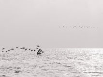πέταγμα πουλιών Στοκ Φωτογραφίες