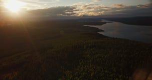 Πέταγμα υψηλό πέρα από ένα δάσος στη σουηδική αγριότητα απόθεμα βίντεο