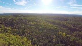Πέταγμα υψηλό επάνω από το μεγάλο κομψό δάσος δέντρων απόθεμα βίντεο