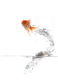 πέταγμα ψαριών στοκ φωτογραφία με δικαίωμα ελεύθερης χρήσης
