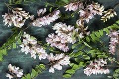 Πέταλα λουλουδιών ακακιών στοκ φωτογραφία με δικαίωμα ελεύθερης χρήσης