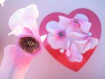 Πέταλα λουλουδιών βαλεντίνων - εκλεκτική εστίαση Στοκ φωτογραφίες με δικαίωμα ελεύθερης χρήσης