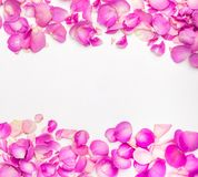 Πέταλα λουλουδιών Στοκ φωτογραφία με δικαίωμα ελεύθερης χρήσης