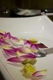 Πέταλα λουλουδιών Lotus στο νεροχύτη Στοκ Φωτογραφίες
