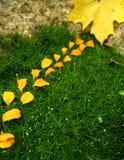 πέταλα φύλλων κήπων Στοκ Εικόνες