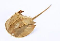 πέταλο καβουριών Στοκ Φωτογραφίες