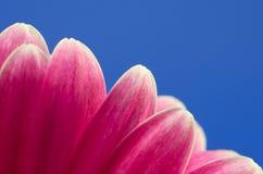 Πέταλο λουλουδιών στοκ εικόνα