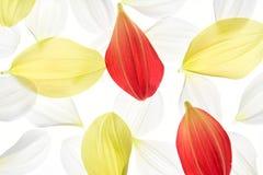 πέταλο νταλιών Στοκ εικόνα με δικαίωμα ελεύθερης χρήσης