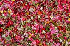 Πέταλα λουλουδιών διεσπαρμένα Στοκ εικόνα με δικαίωμα ελεύθερης χρήσης