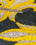 Πέταλα λουλουδιών στην κατακόρυφο Στοκ Εικόνες