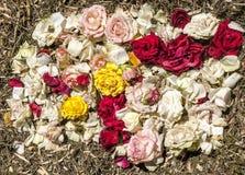 Πέταλα λουλουδιών Στοκ εικόνα με δικαίωμα ελεύθερης χρήσης