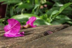 Πέταλα λουλουδιών Στοκ Εικόνα