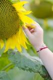 Πέταλο μαζέματος με το χέρι μικρού κοριτσιού από τον ηλίανθο Στοκ εικόνα με δικαίωμα ελεύθερης χρήσης