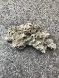 Πέτρα λάβας Στοκ φωτογραφία με δικαίωμα ελεύθερης χρήσης