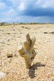 Πέτρα άμμου με το μπλε ουρανό Στοκ εικόνες με δικαίωμα ελεύθερης χρήσης