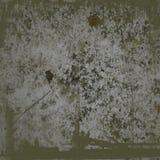 πέτρα βρύου σημαδιών ανασκό& Στοκ φωτογραφίες με δικαίωμα ελεύθερης χρήσης