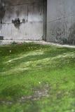 πέτρα βρύου Στοκ εικόνα με δικαίωμα ελεύθερης χρήσης