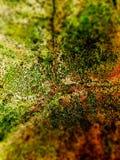 Πέτρα επιφάνειας ρωγμών με την πλαστή κάλυψη MOS Στοκ Εικόνα