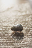 Πέτρα καρδιών κοσμημάτων μικρής αξίας αγάπης Στοκ Φωτογραφία
