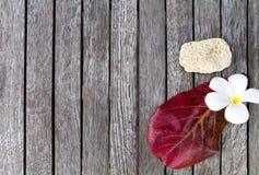 Πέτρα κοραλλιών, λουλούδι plumeria και κόκκινο φύλλο Τροπική έννοια διακοπών Η φωτεινή σύνθεση θάλασσας στον ξύλινο πίνακα, επίπε Στοκ Εικόνες