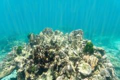 Πέτρα κοραλλιών και κοραλλιογενής ύφαλος υποβρύχιες στο φως Στοκ φωτογραφίες με δικαίωμα ελεύθερης χρήσης