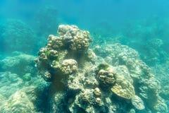 Πέτρα κοραλλιών υποβρύχια στο φως ήλιων Στοκ Εικόνες