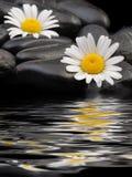 πέτρα μαργαριτών Στοκ φωτογραφία με δικαίωμα ελεύθερης χρήσης